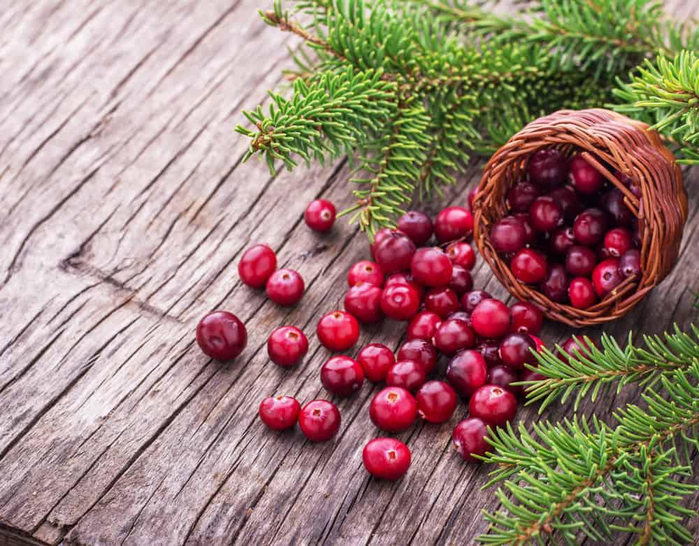 cistite-emorragica-dolore-cranberry